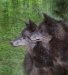 wolfPair