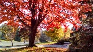 Fall_Tree-Adj
