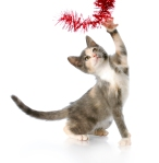 playful christmas kitten